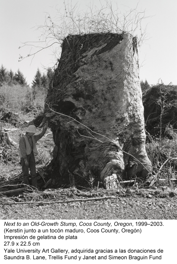 Next to an Old-Growth Stump, Coos County, 1999-2003. Robert Adams